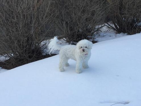 zoey snow 2